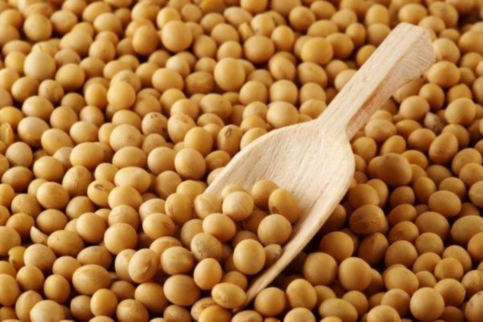 substanțele fitochimice din soia