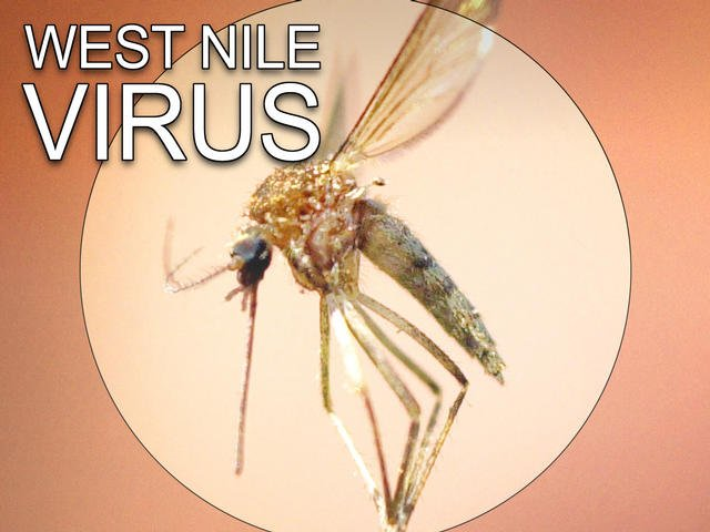 virus west nile decese