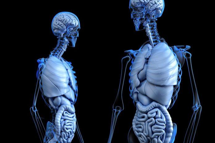 Detoxifierea colonului a devenit un obicei foarte popular in curele de slabire si ajuta la detoxifierea rapida a organismului.