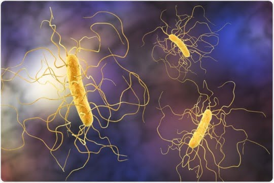 Infecția cu Clostridium difficile - Simptome, complicatii, tratament