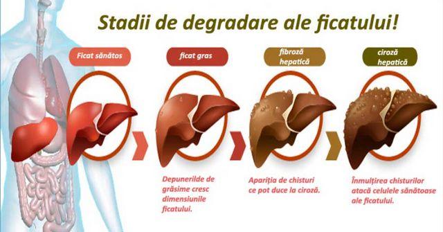 degradarea ficatului